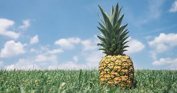 Ananas e prato