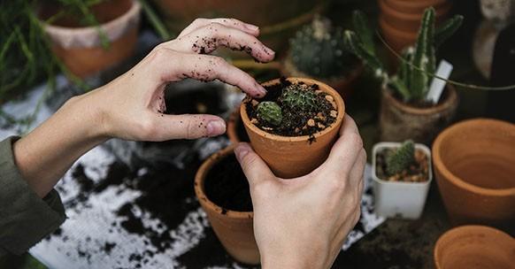 Rinvaso piante grasse