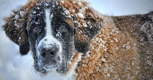 Cane inverno