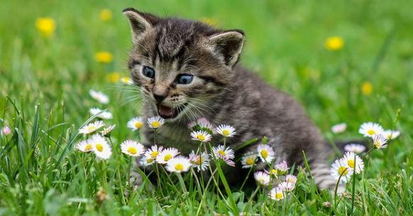 Gattino e fiori