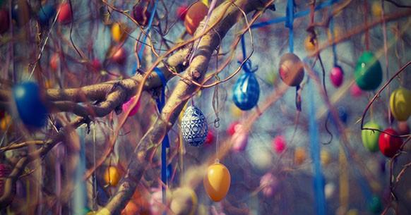 Piante di Pasqua