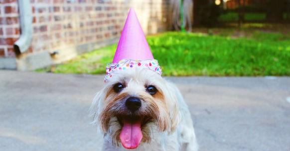 Cane e compleanno