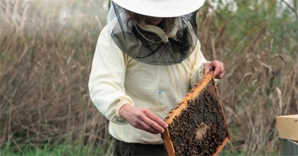 Terre de Femmes, api
