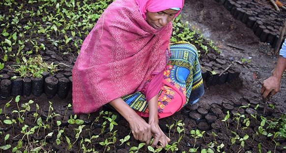 Ecosia in Tanzania