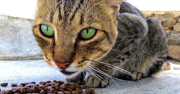Gatto e cibo