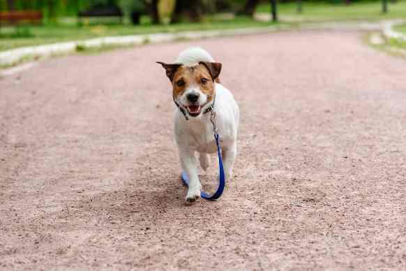 Comune di Milano: tutte le regole per i cani