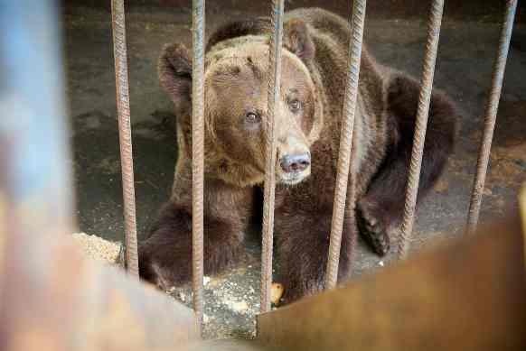 animali al circo: sfruttamento non si ferma