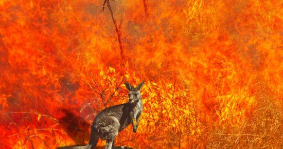 Incendi in Australia: il rischio