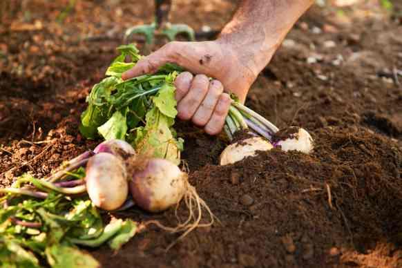 febbraio: verdura di stagione