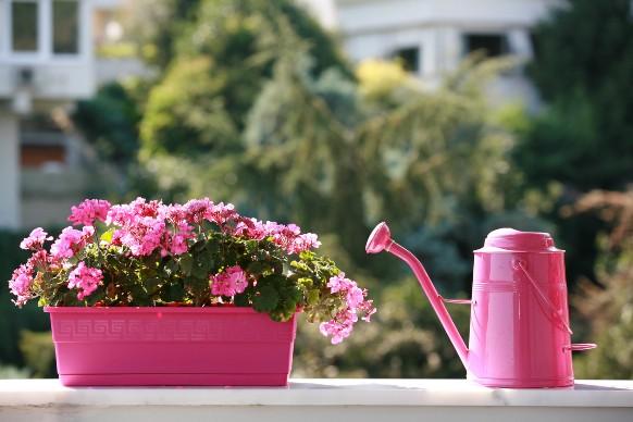 Fiori di Primavera: i migliori per il balcone