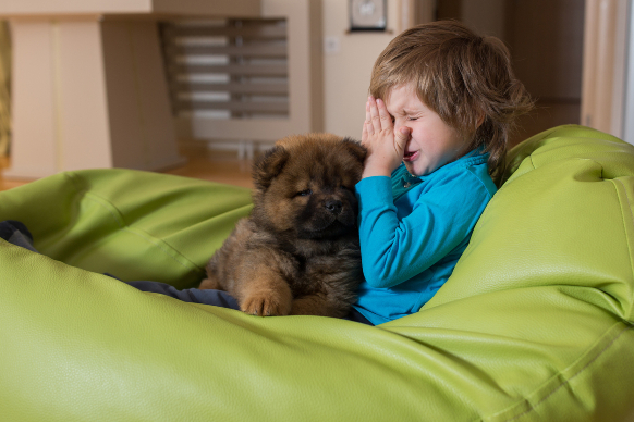 Allergia al pelo del cane: cosa fare?