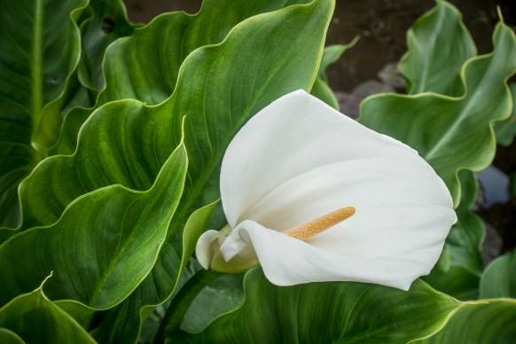 Quali sono le piante acidofile e come curarle