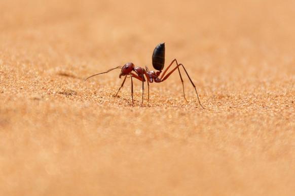 Perché si sognano le formiche?
