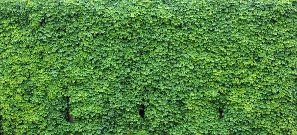5 piante tappezzanti per il giardino