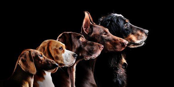 Le interpretazione del sogno a tema canino