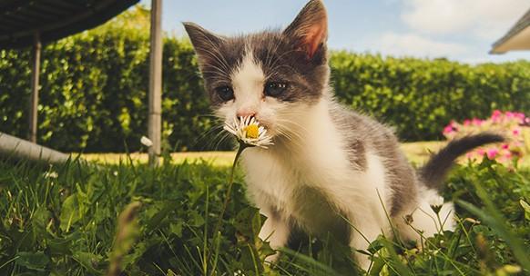 Gatto e fiore