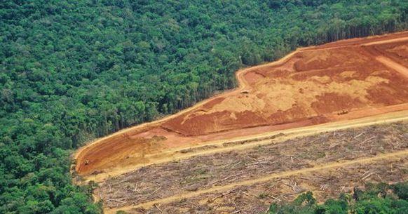Amazzonia, deforestazione
