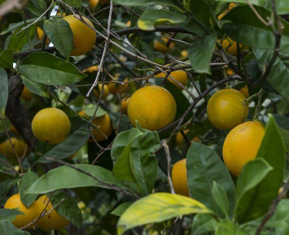 Dieta arance e mandarini: come funziona?