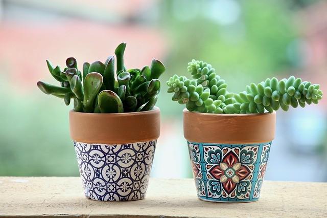 Piante grasse in vasi decorati