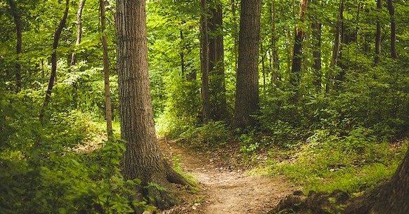 Foresta alberi sentiero