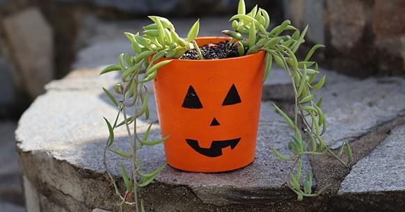 Halloween, vaso