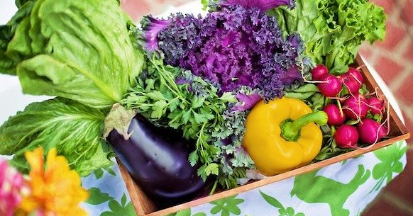 Verdura melanzane peperoni insalata