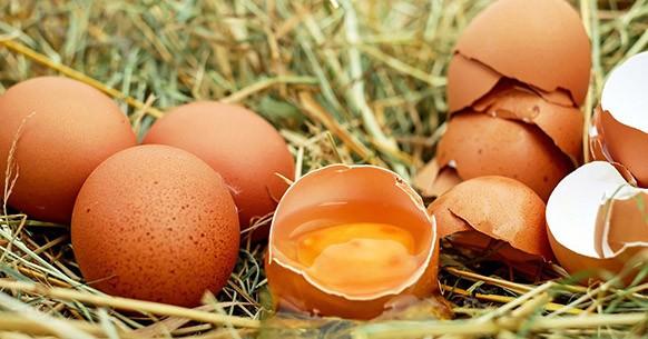 Gusci uova