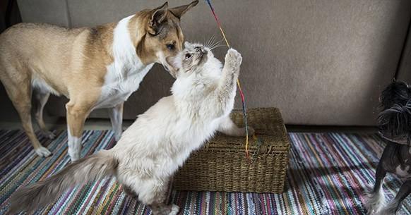 Cane e gatto, casa