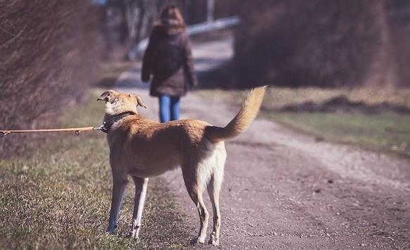 Cani abbandonati, cane sottoposto ad abbandono