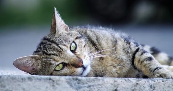 Gatto abbandonato randagio