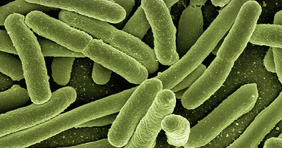 Bacteria, air in the belly