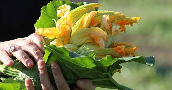 Calendario dell'orto, zucchine