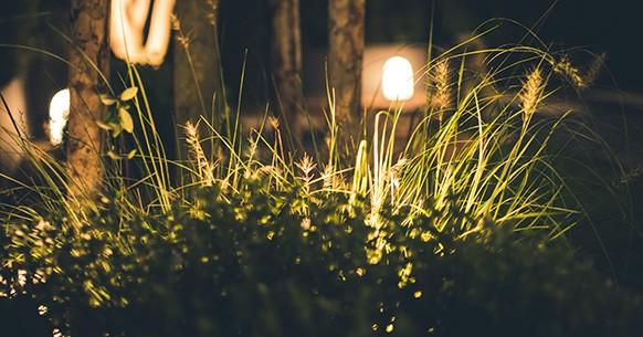 Fotografare orto di notte