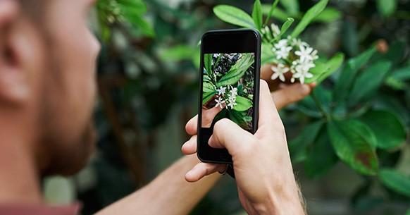 Fotografare piante e orto