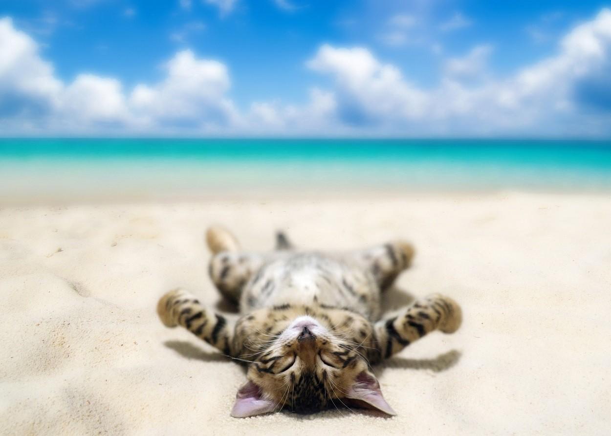 gattino vacanze in spiaggia