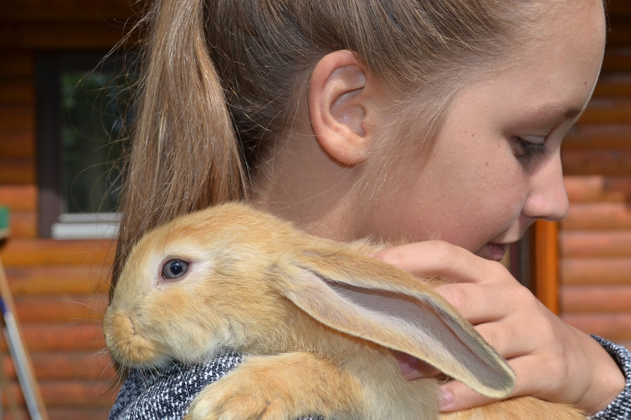 Interventi Assistiti Animali con coniglio