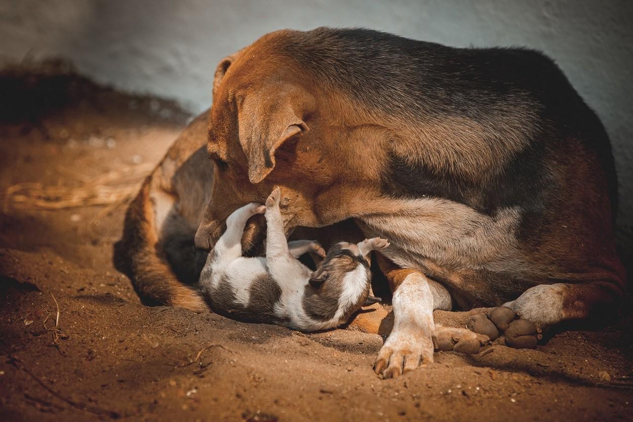 Mamma cane e cuccioli con microchip