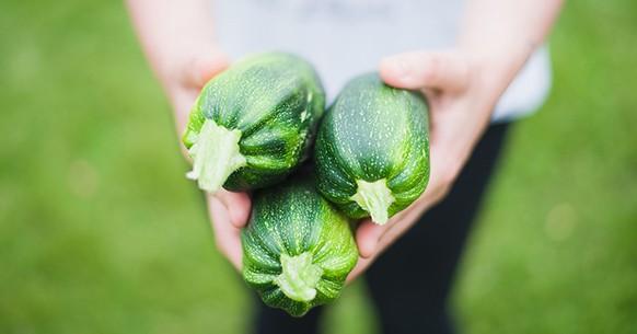 Zucchine, calendario orto