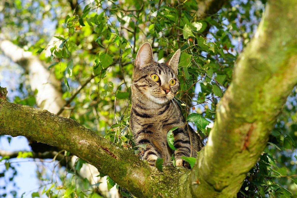 Gatti e alberi