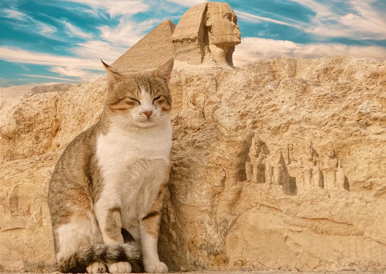 Gatto Egitto