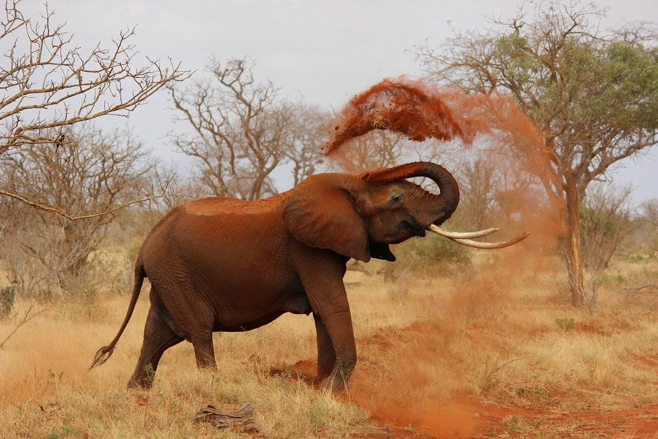elefanti documentari