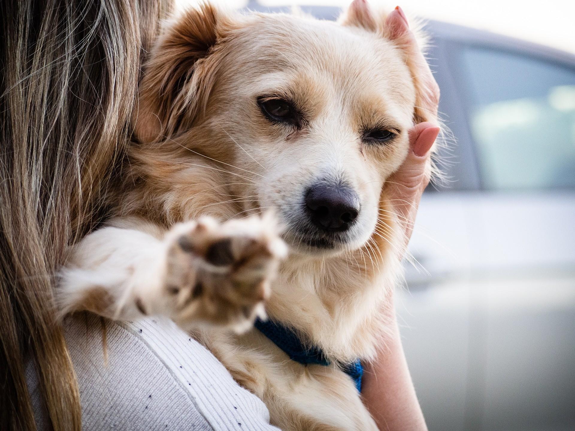 abbracciare il cane